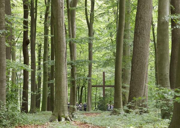 Bild Beisetzung im RuheForst Deister
